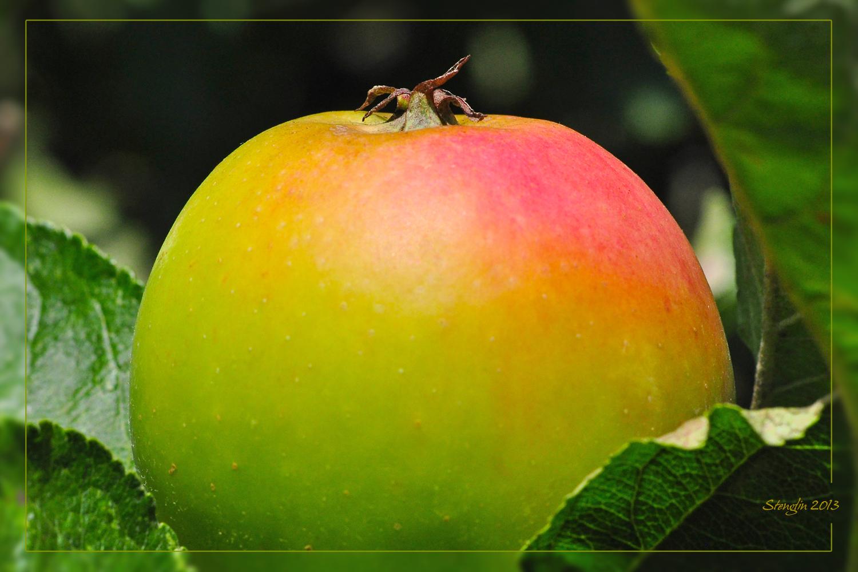 267-13 König Apfel