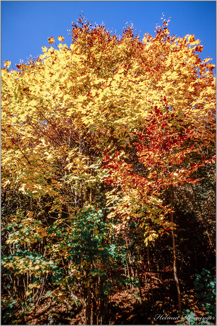 2856 Herbst im Scharzwald
