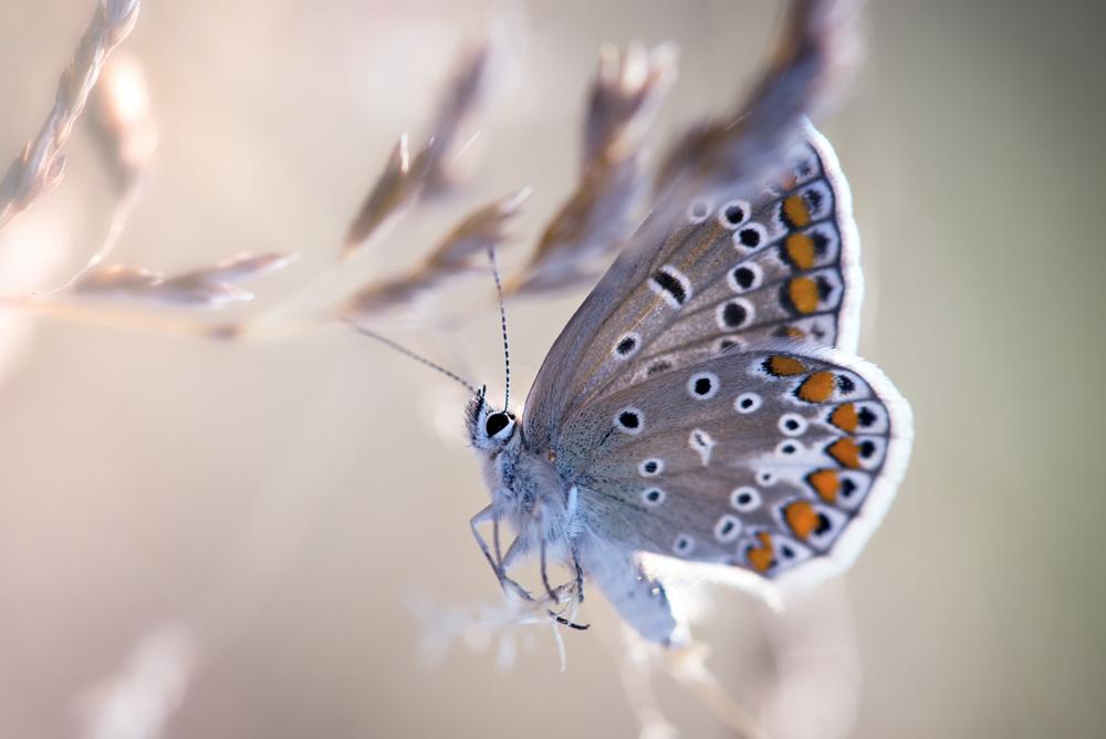 28.8 Schmetterling