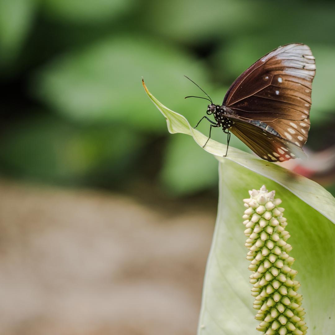 295  im Schmetterlingshaus