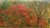 Herbst von Michael Feuchert