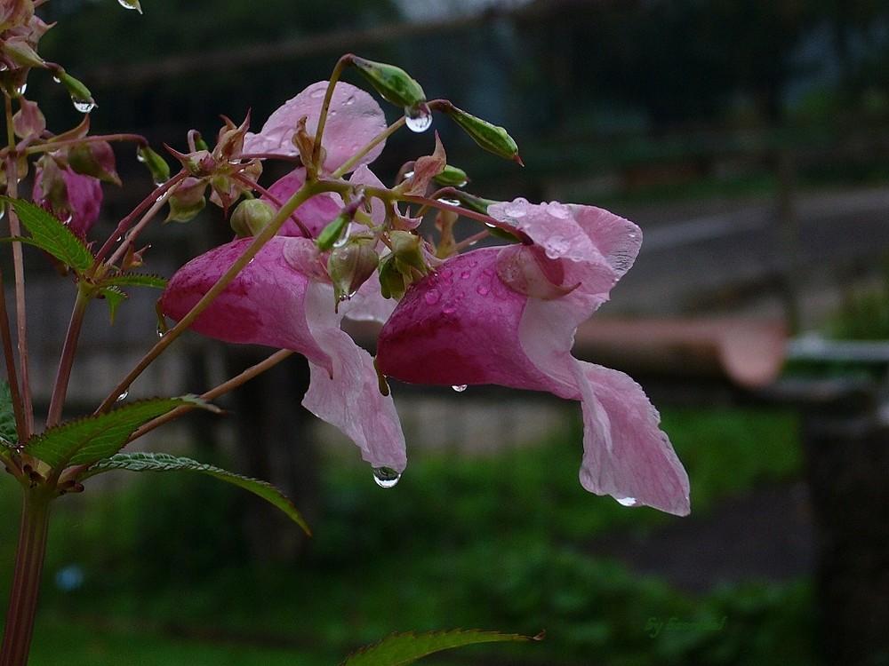 2.Bei uns regnet's