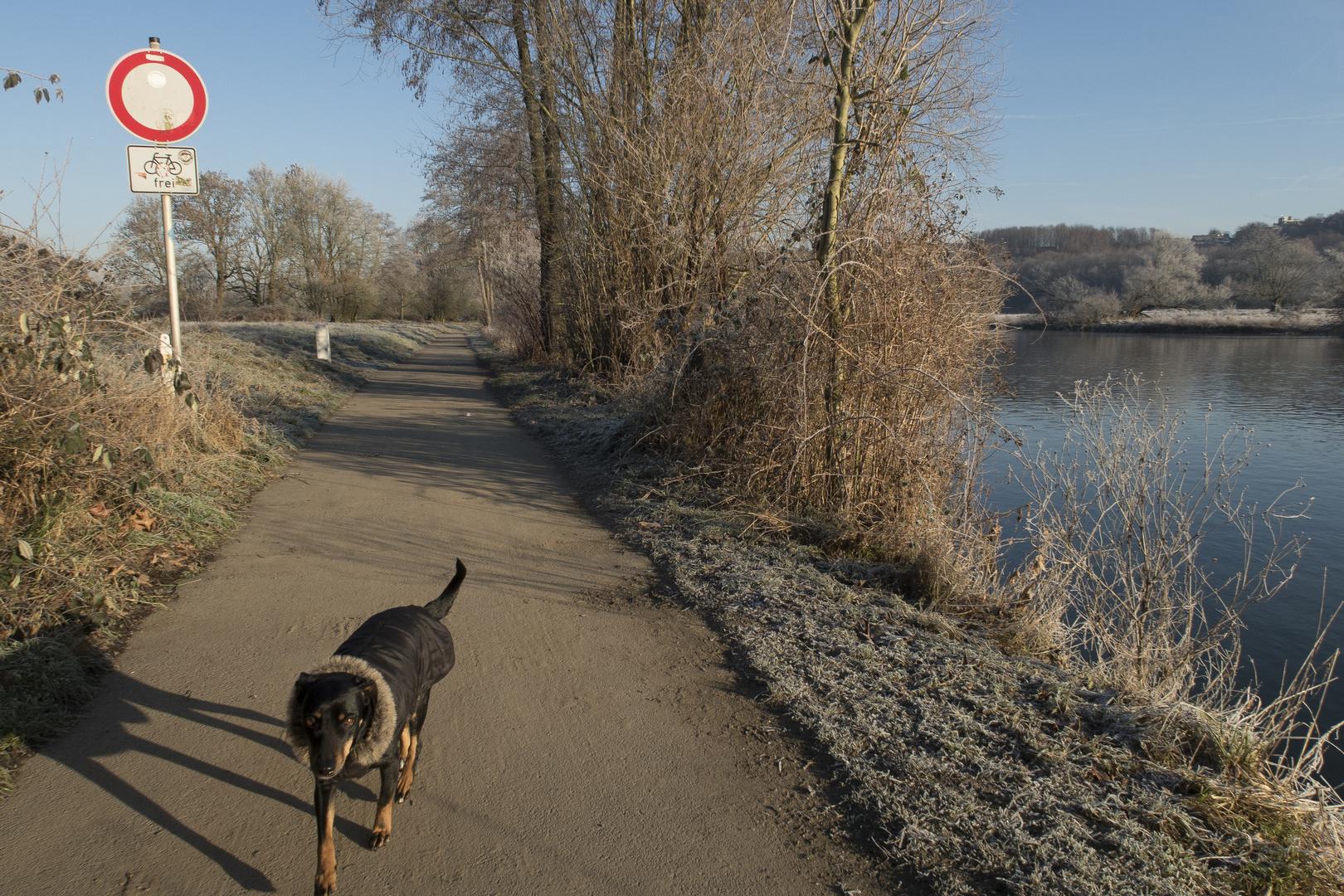 """2s. vor Aufnahme! Hund über sich und Ruhr: """"psyché, Fließen und Schnüffeln im Einklang. Wir beide!"""""""