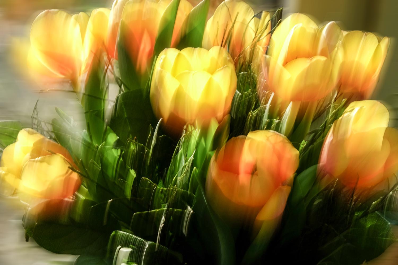 2x tulpen in der vase foto bild pflanzen pilze. Black Bedroom Furniture Sets. Home Design Ideas