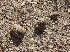 3-2-1 nach turtle-home