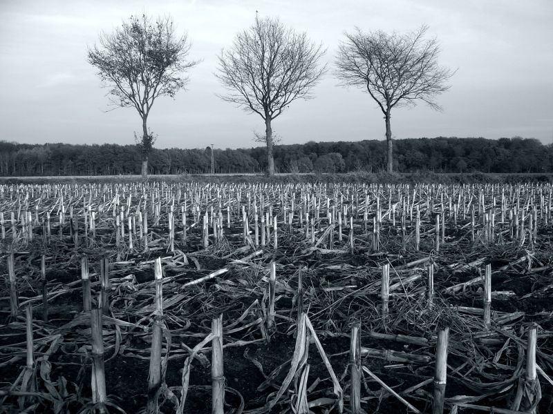 3 Bäume