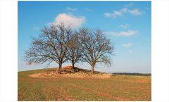 3 Bäume, die Zwote - auf besonderen Wunsch in 4c