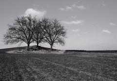 3 Bäume, die Zwote