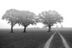 3 Bäume Weg im Morgennebel