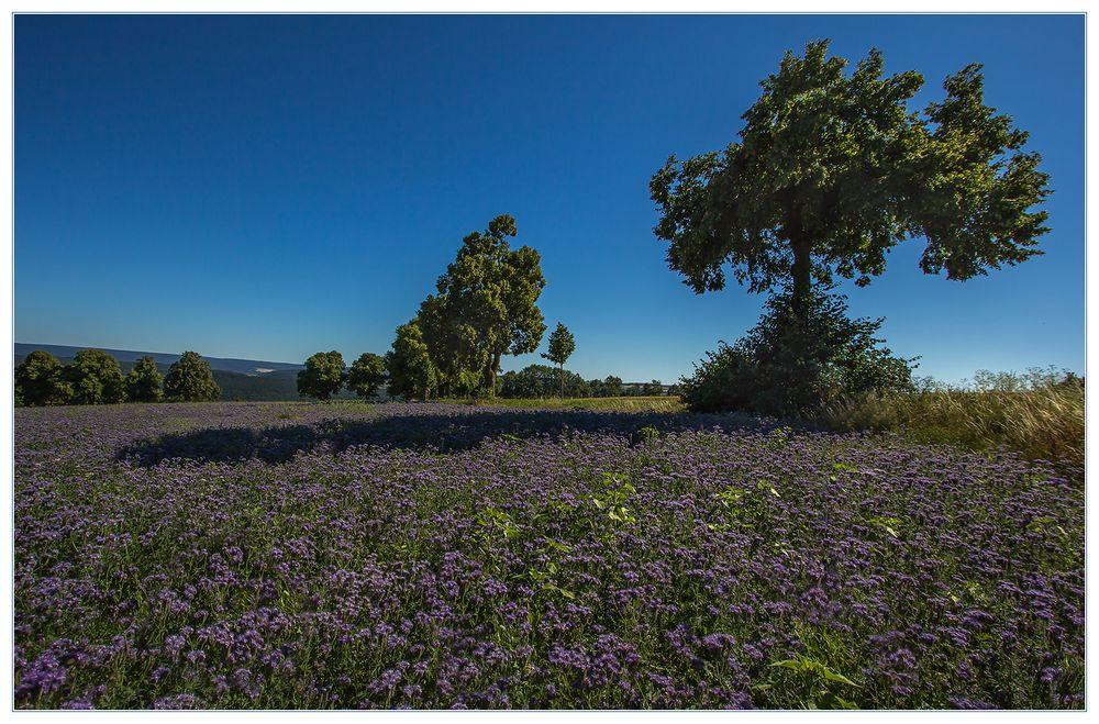 3 D-Effekt - ...einem Lavendelfeld ähnlich...