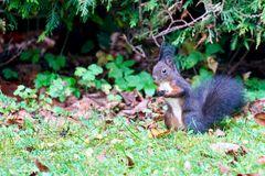 3 Eichhörnchen...