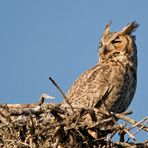 (3) Ein paar Minuten blieb das Weibchen...