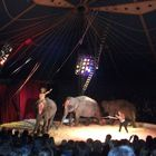 3. elephants in circus bremen