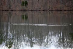 3 Enten auf dem Lake Haiger