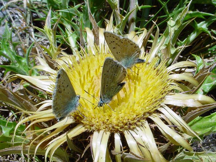 3 farfalle