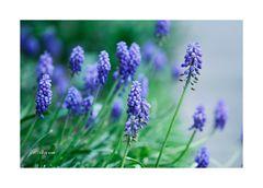 3 Frühling :)