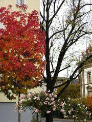 3 Jahreszeiten an einem (Herbst-)Tag .....
