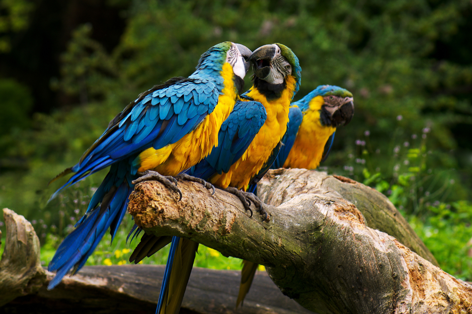 3 papageien foto & bild | tiere, tierfreundschaften, natur