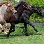 3 Pferdestärken