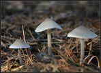 3 Pilze
