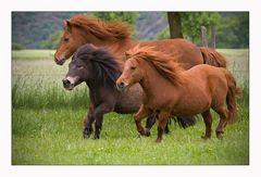 3 Ponys