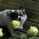 3 Rosen für die kleine Maus