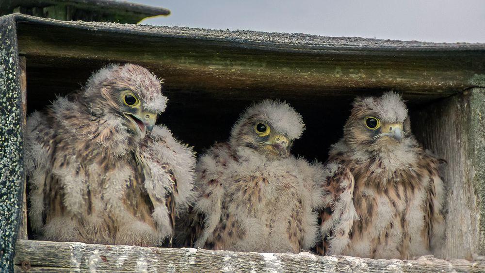 3 von 4 - das Nesthäkchen kann sich nicht durchsetzen!
