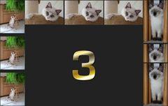 3 von 9