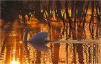 31.März - Schwanensee