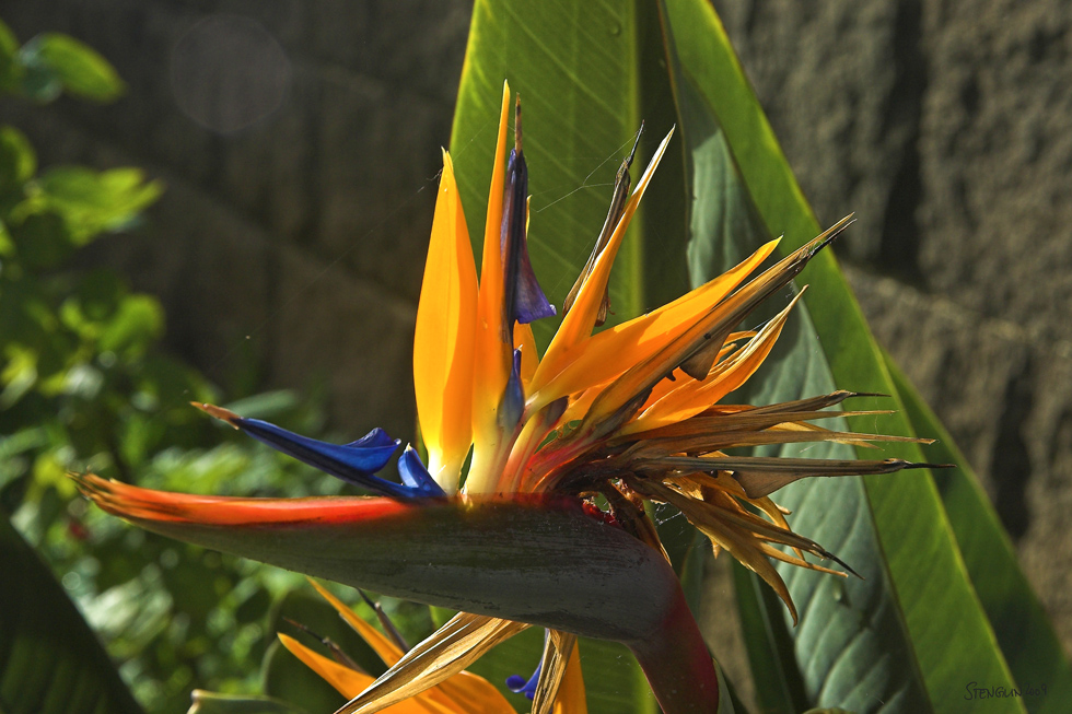 37-09 Madeira - Insel der Farben #6