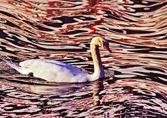 3751....reflets sur le lac (Annecy)