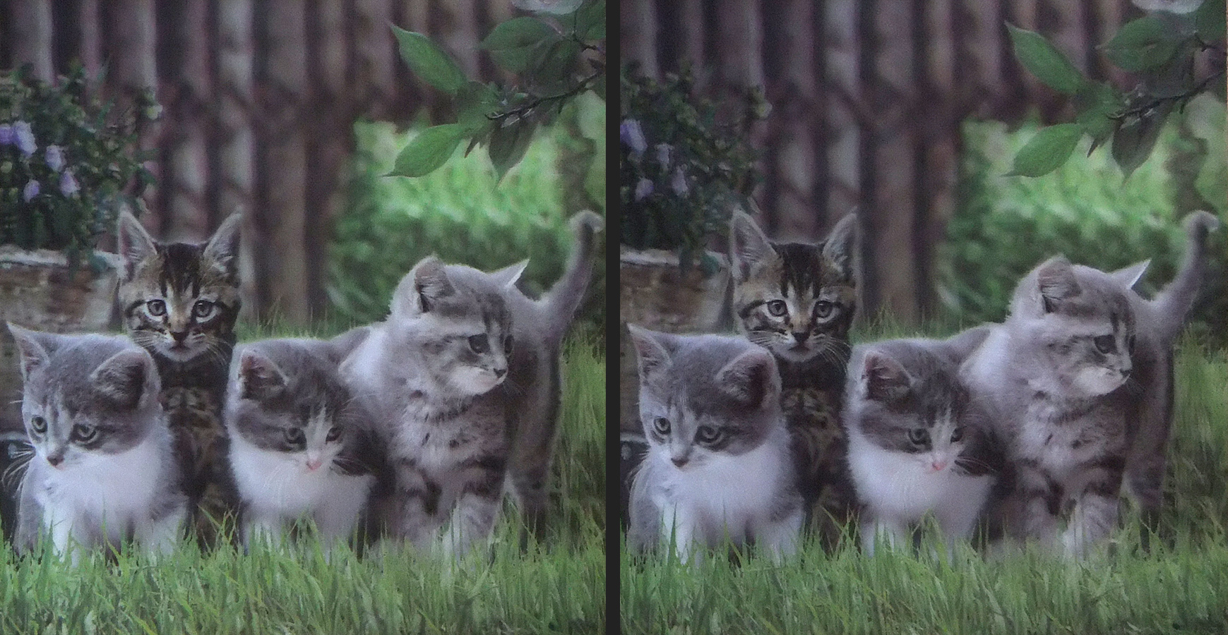 3D-Kätzchen