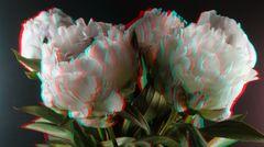 3D_Blüten. Bitte MPO gucken, oder Vollversion.