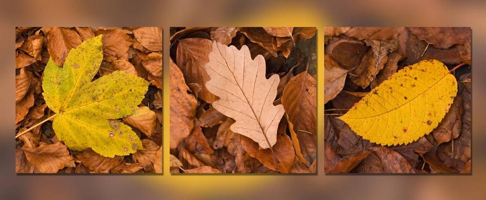 3er Serie Herbst