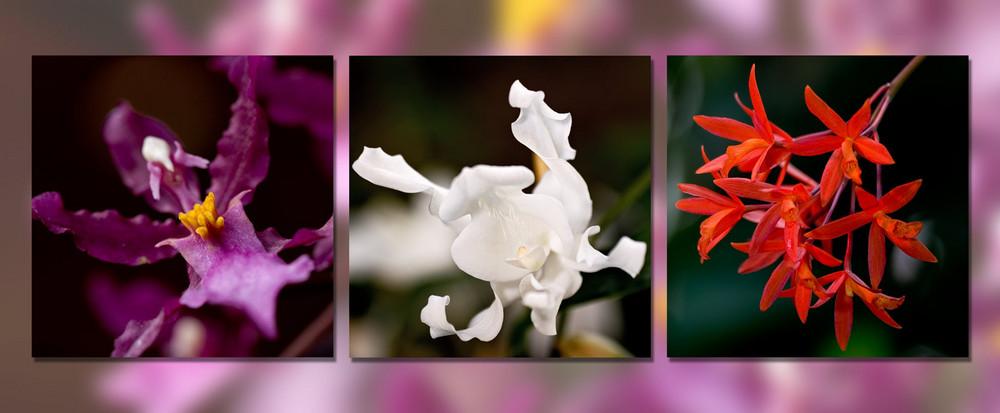 3er Serie Orchidee
