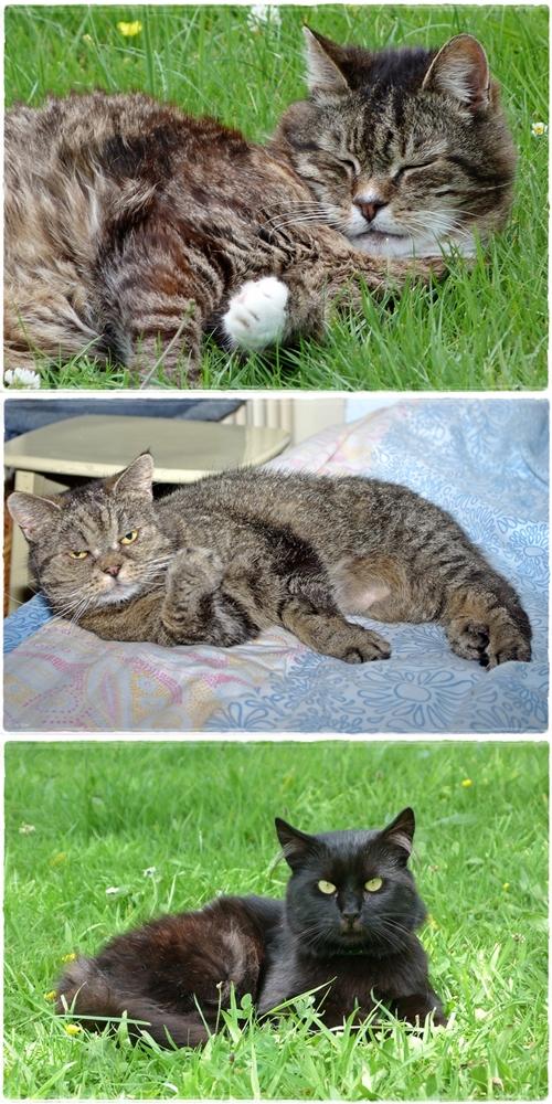 3x Entspannung :Bonny,Mucki und Fidel