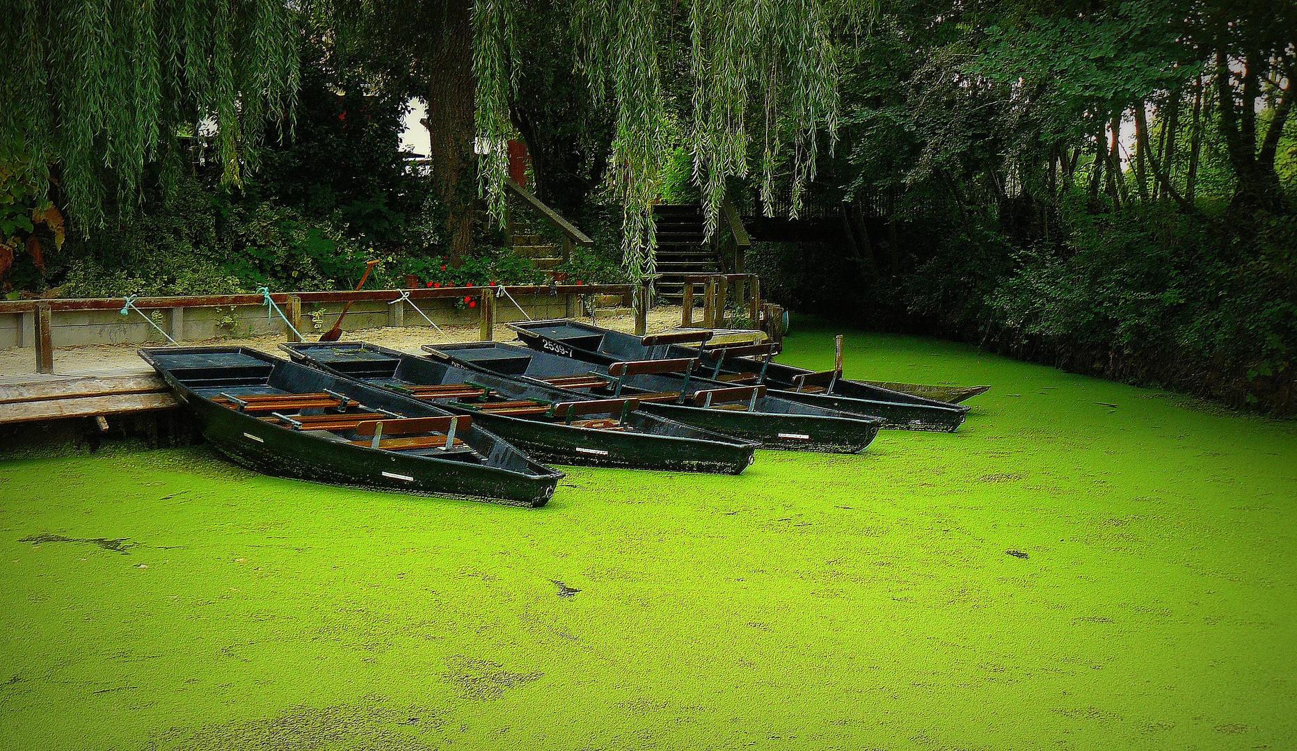 4 barques sous un saule