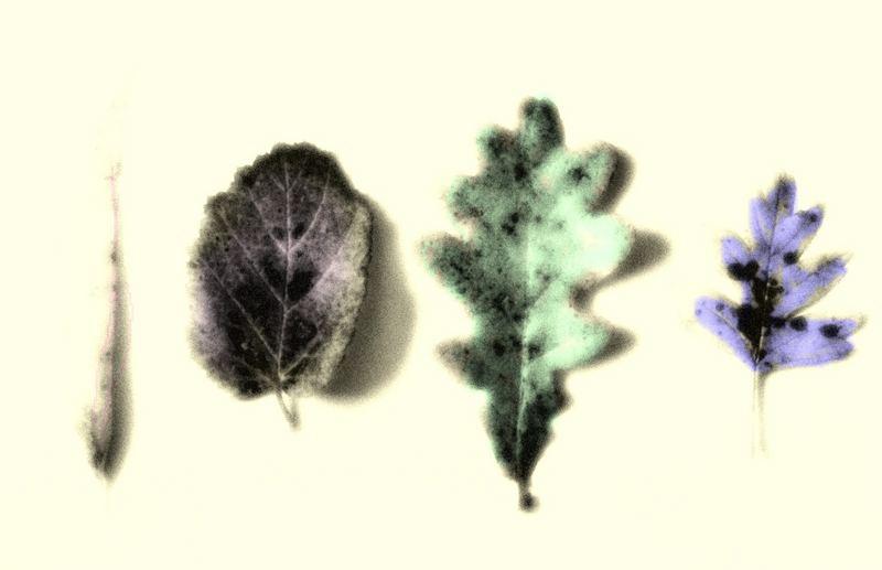 4 Blätter