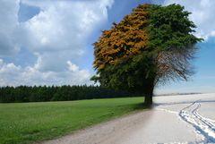 4 Jahreszeitenbaum