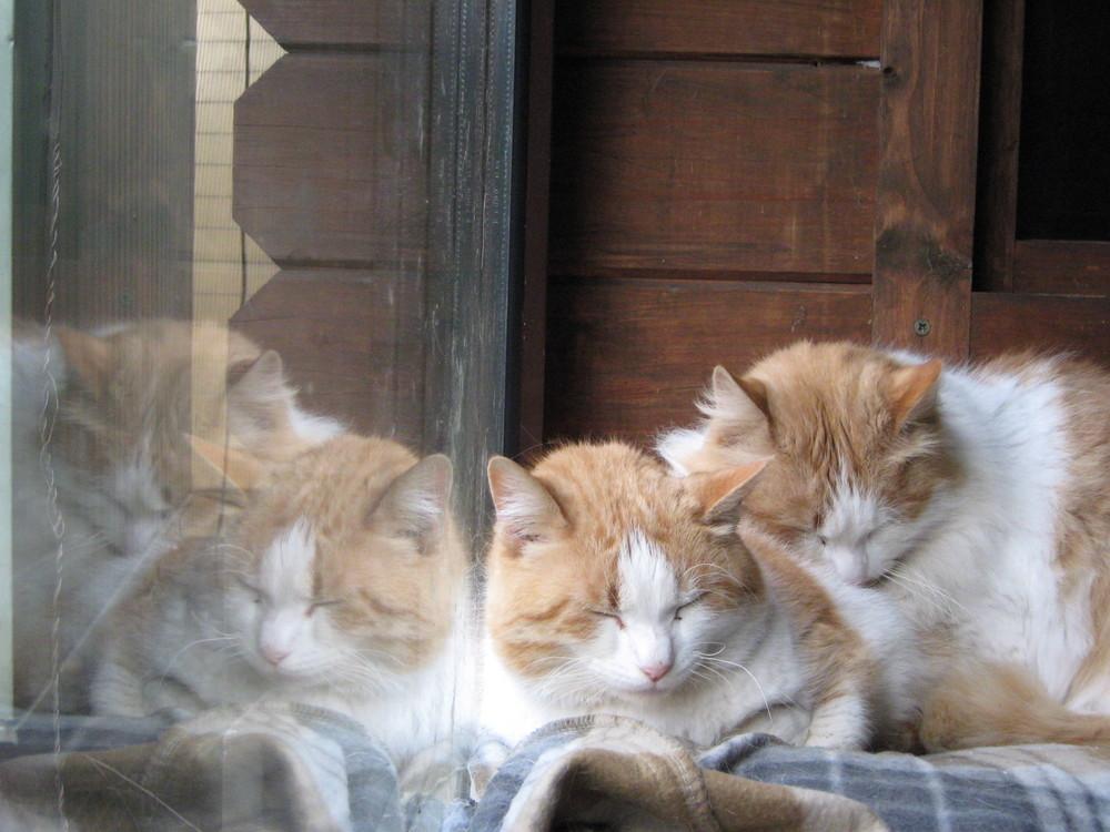 4 Katzen?