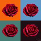 4 Roses 4