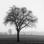 4 TREES [02]