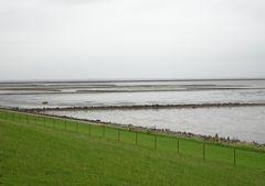 (4) Wattenmeer