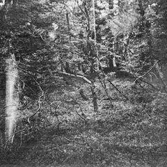 40 Jahre im Wald ....