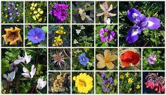 44 Mittwochsblümchen – Teil I