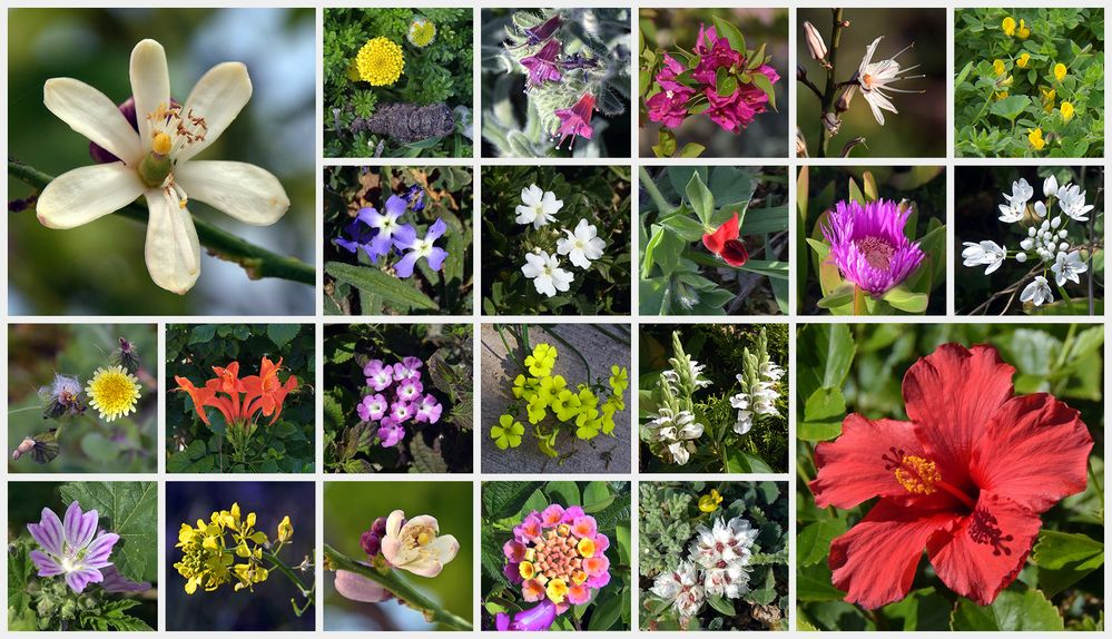 44 Mittwochsblümchen – Teil II