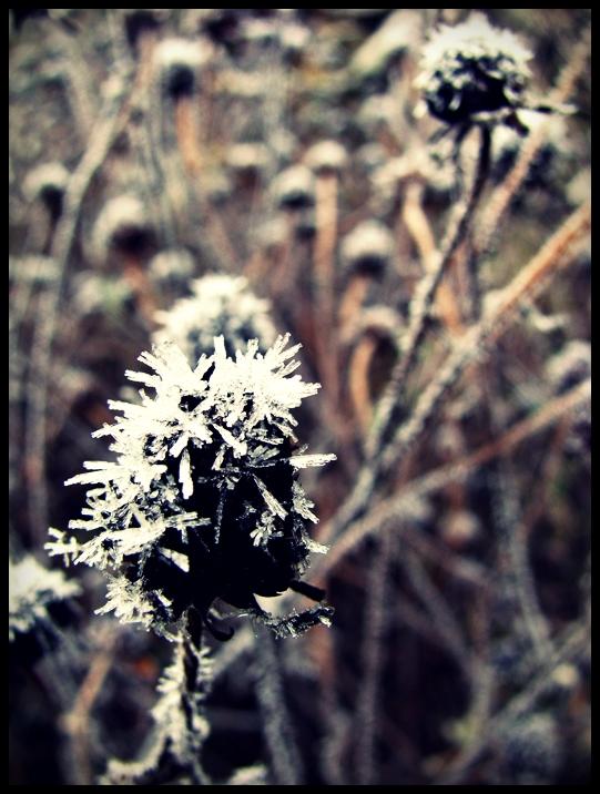 48. Kalter Hauch des Winters
