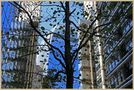 city tree 2 by markkeville