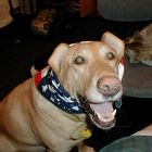 4th of July for Lady my dog