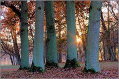5 Bäume